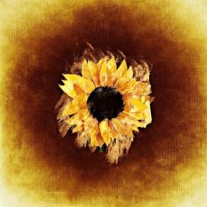 sun-flower-730481_640